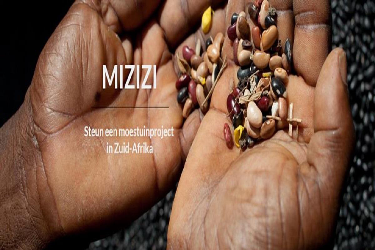 Mizizi